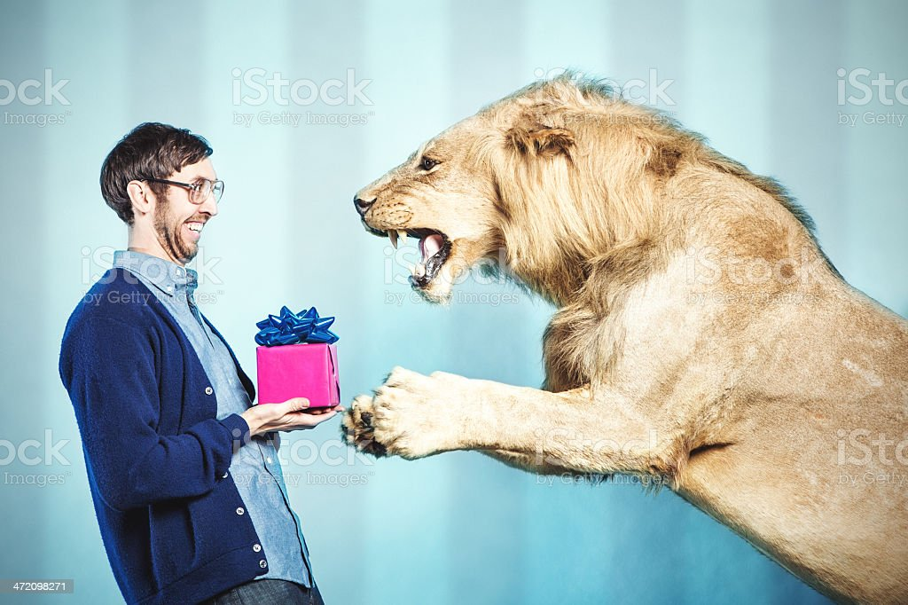 Birthday Present for a Lion stock photo