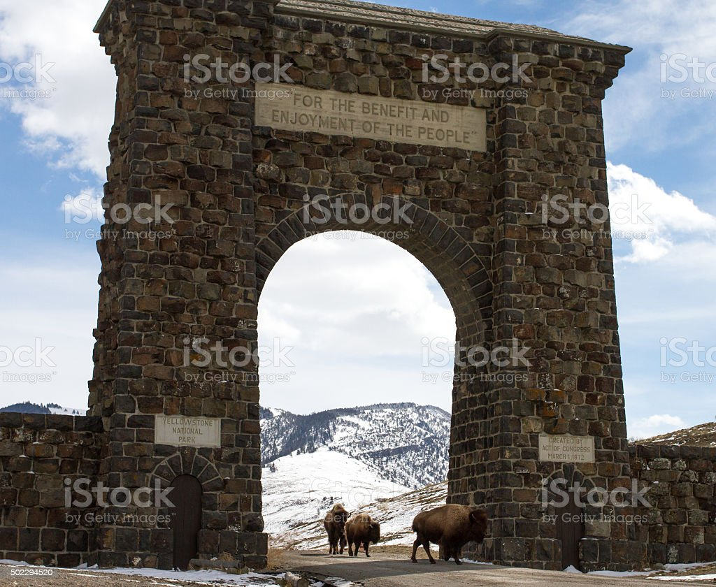 bison herd migrates through gateway arch stock photo
