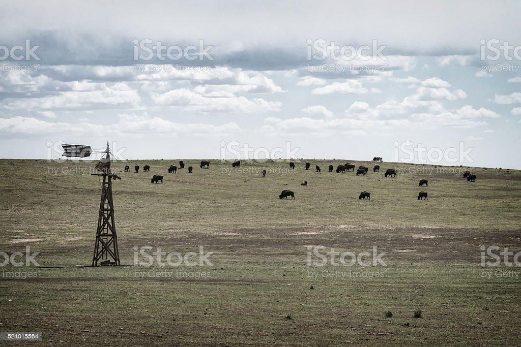 Bison on prairie stock photo