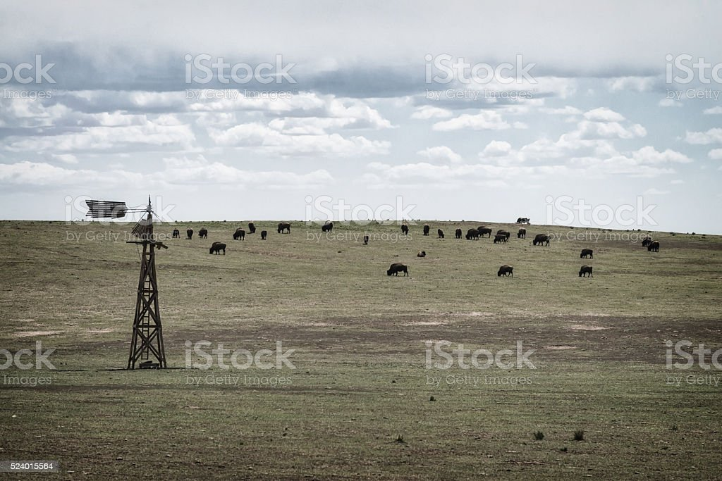 Bison on prairie stock photo