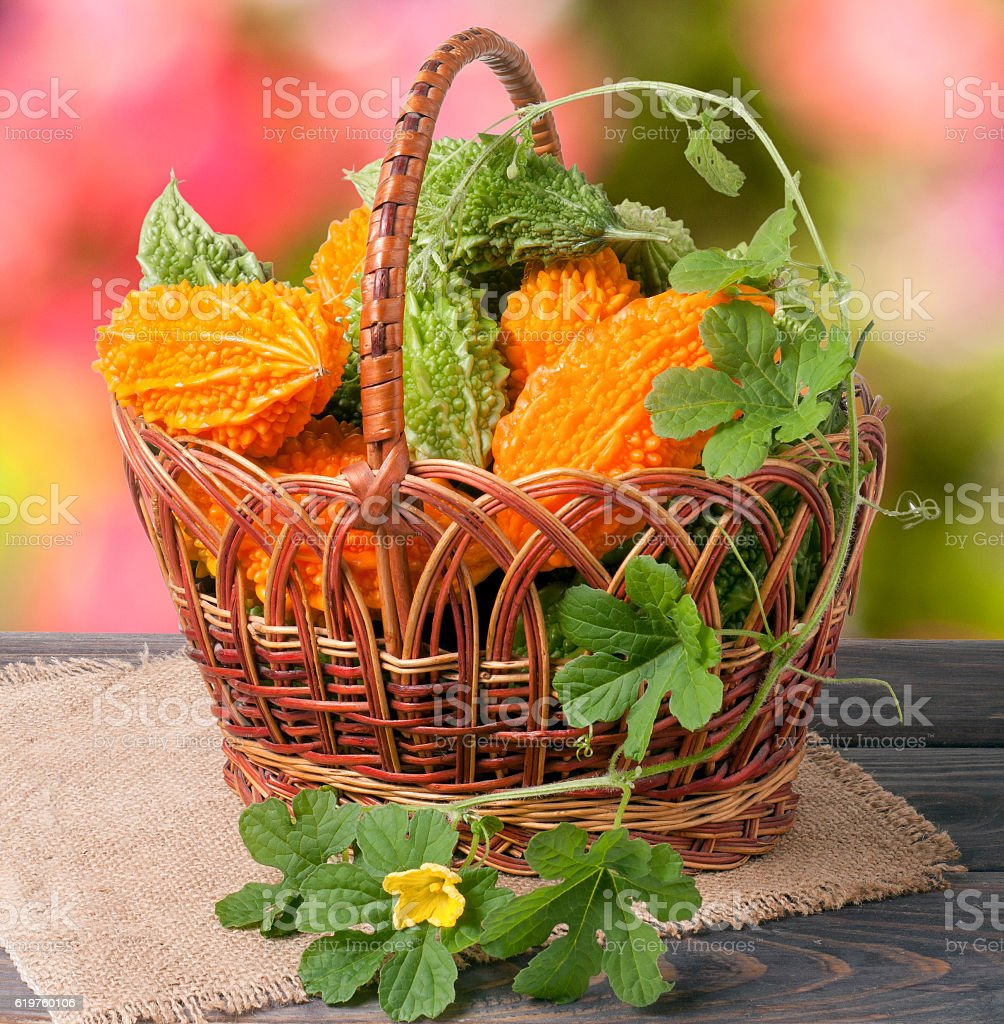 bitter melon or momordica in a wicker basket on wooden stock photo