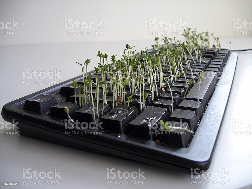 Bittercress planted on a keyboard, shot 1 royalty-free stock photo