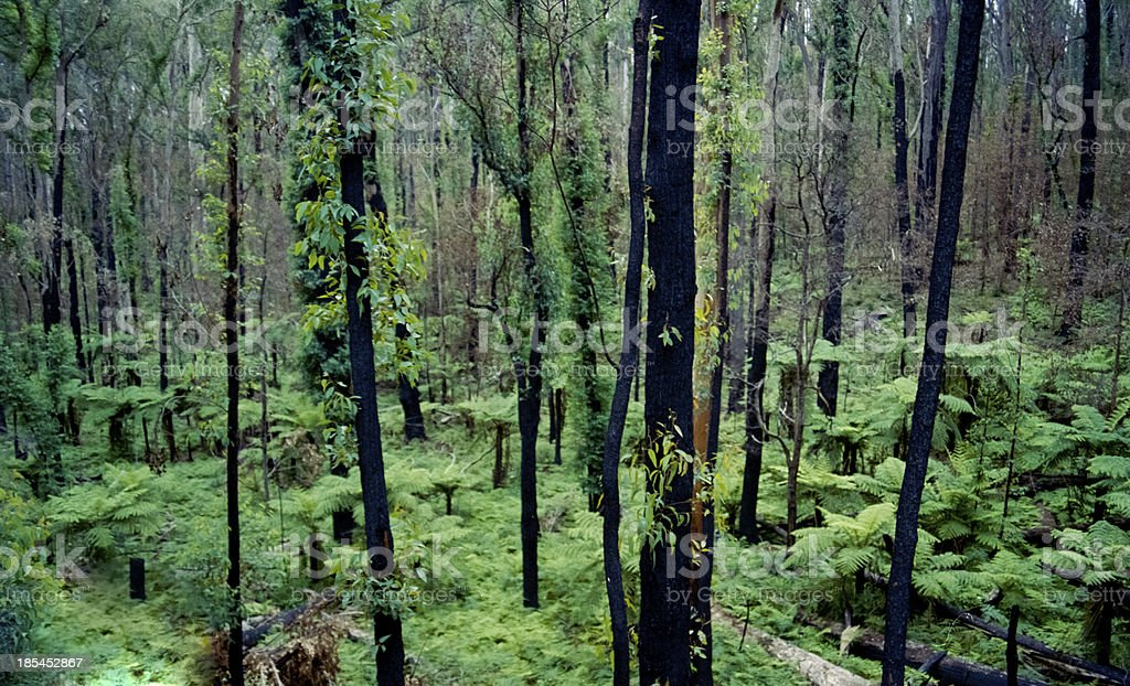 black and green forest stock photo