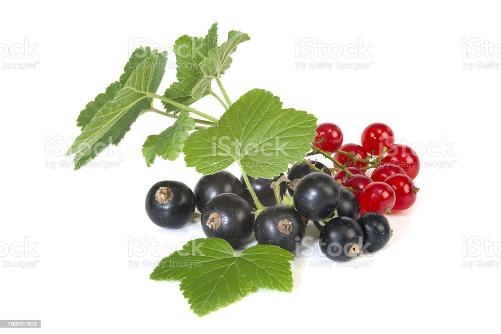 Black and Red Currant royalty-free stock photo