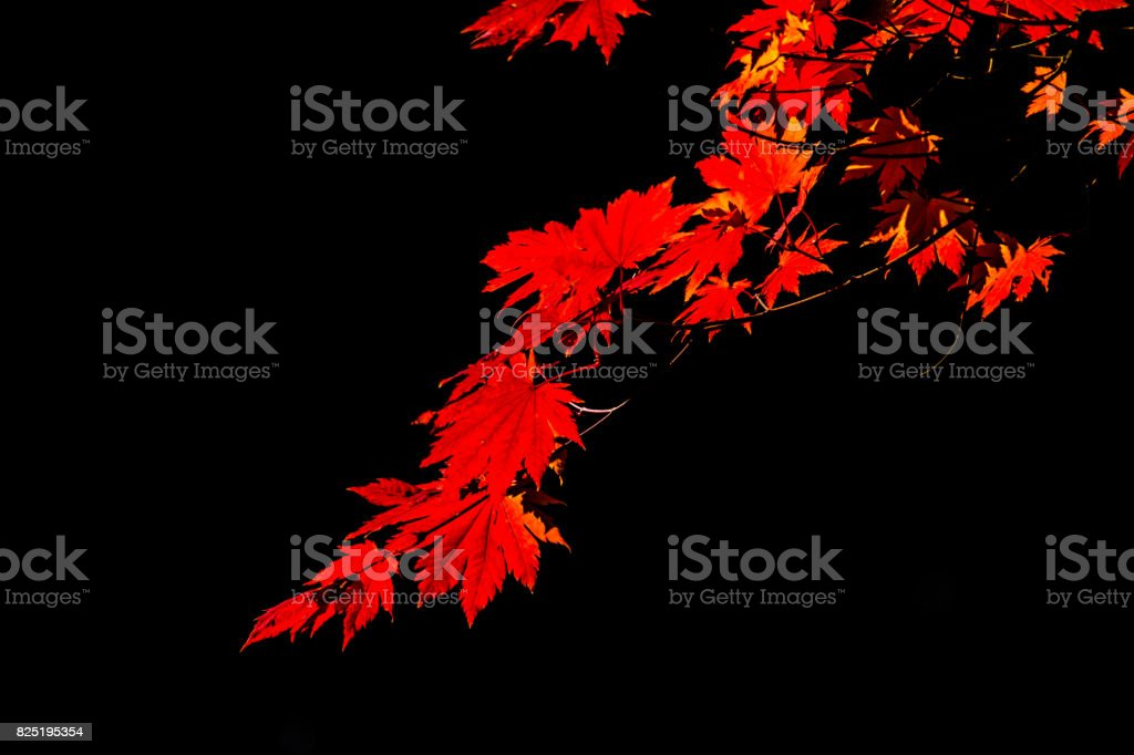 Black and red stock photo