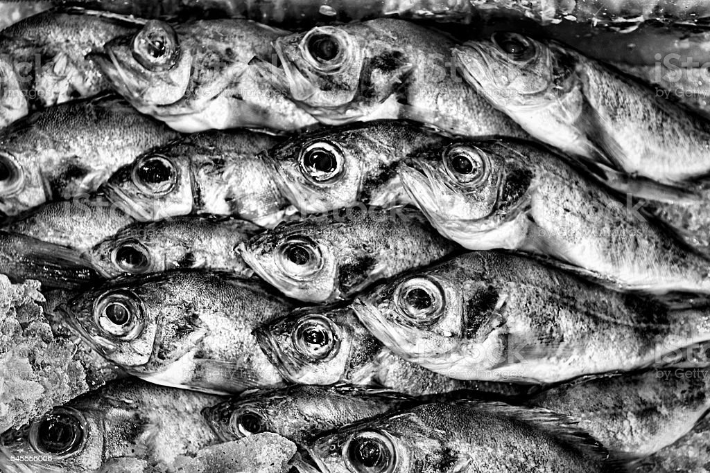 Black and white background of fish. stock photo