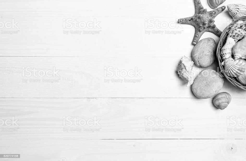 Black and white background with seashells and starfish on white stock photo