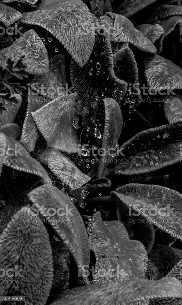 Black and White Botanics stock photo