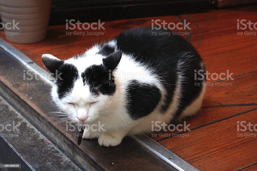 black and white cat asleep on the porch stock photo