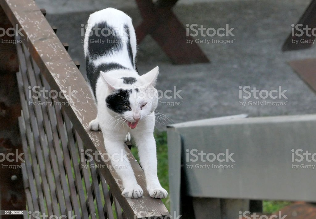 Black and white cat is stretching stock photo