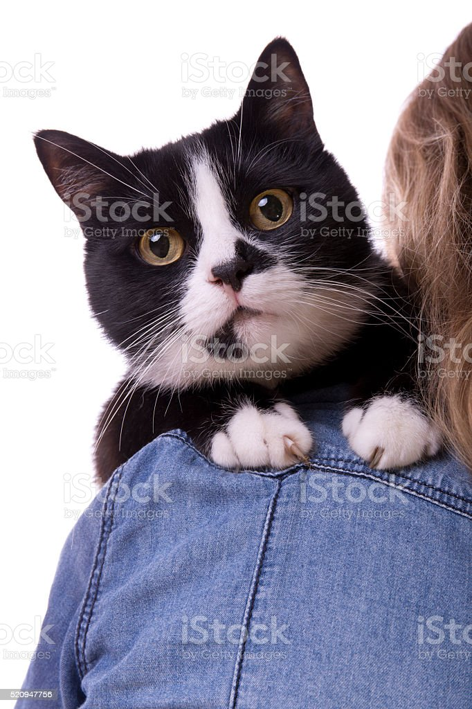 black and white cat on the shoulder close up stock photo