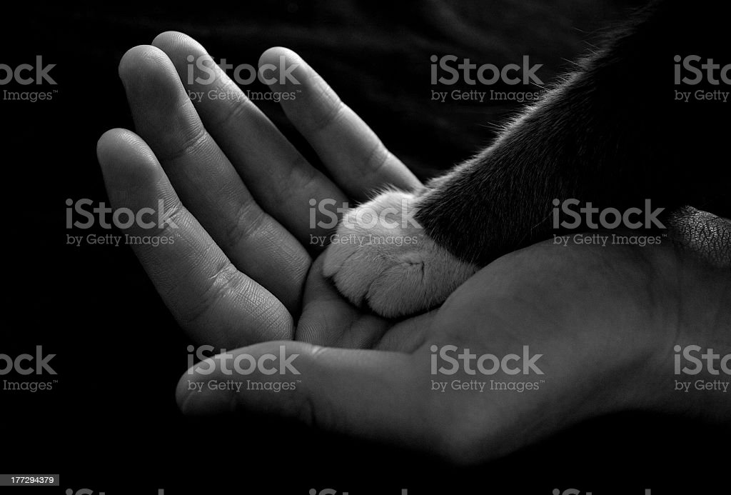 Black and white cat paw over a human hand in grayscale stock photo