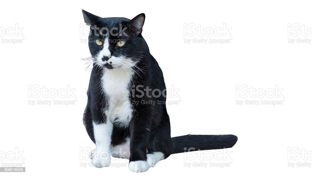Schwarze und weiße Katze  Lizenzfreies stock-foto