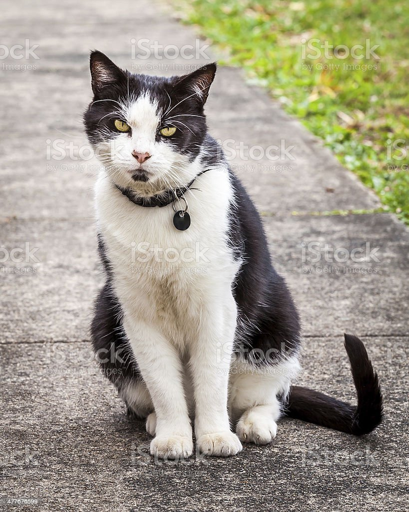 Black and White Cat Sitting and Leaning Sideways on the Sidewalk royalty-free stock photo