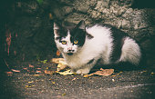 black and white cat sitting on a street cat with