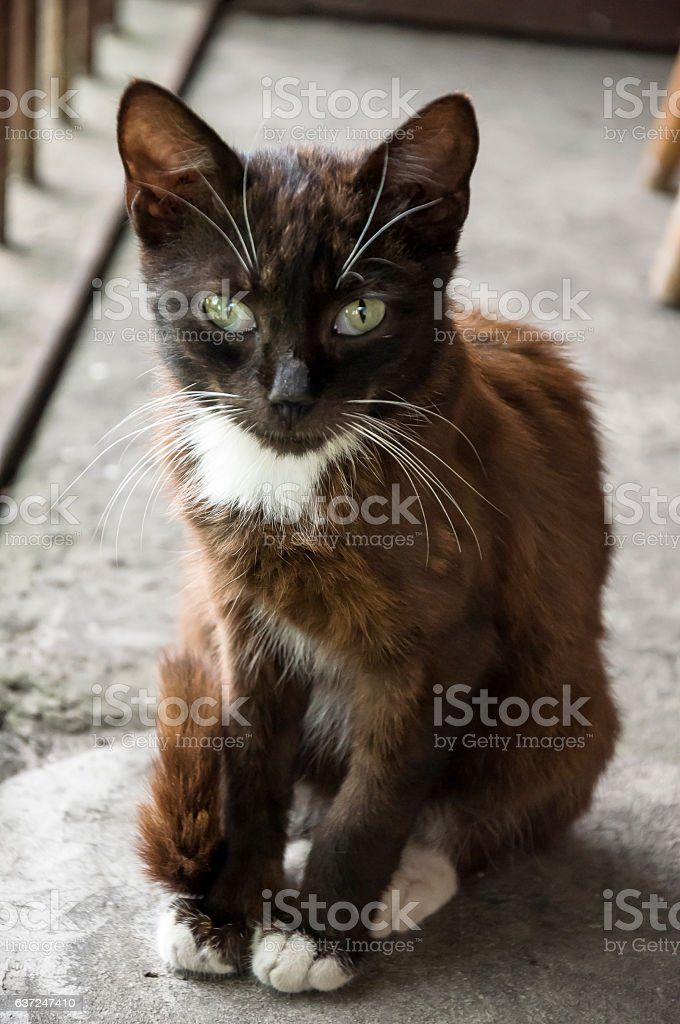Black and white cat with green eyes stock photo