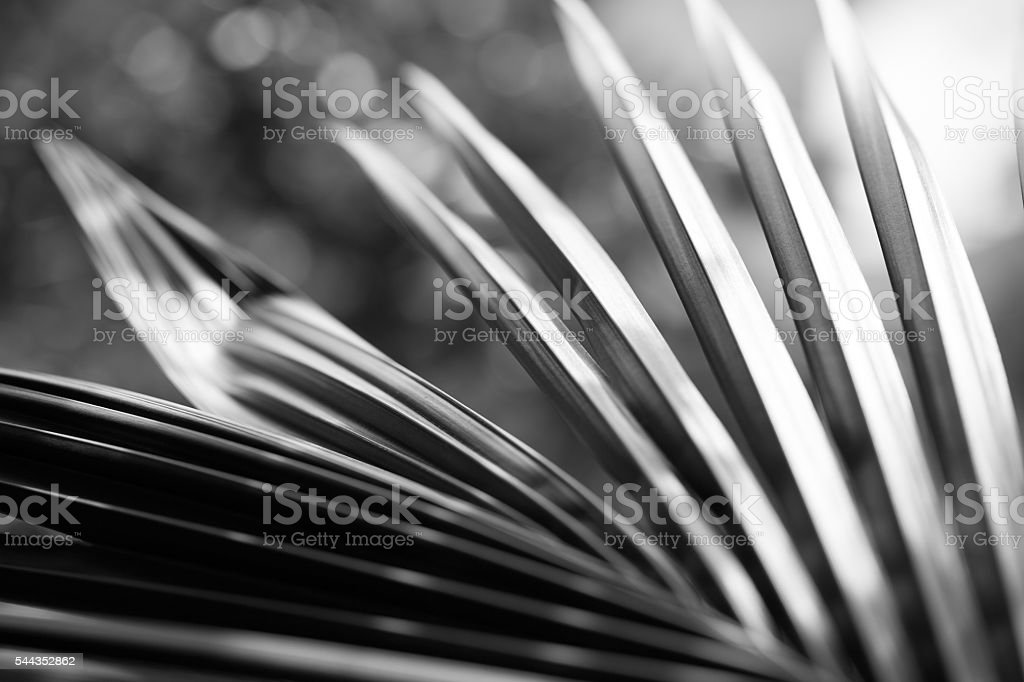 Black and white close up view of beautiful green palm stock photo
