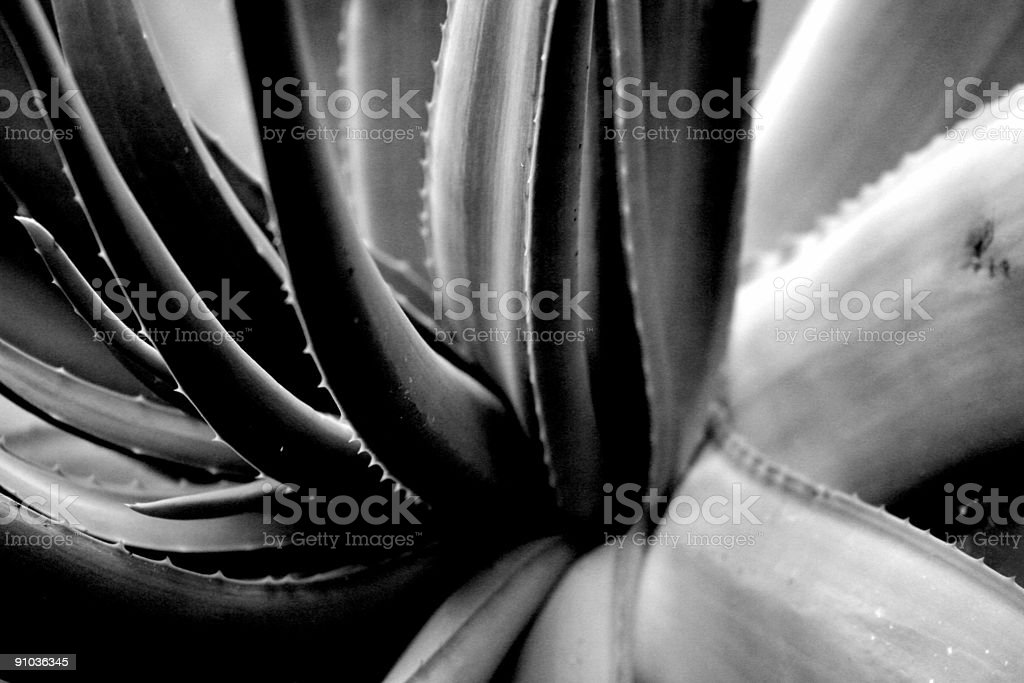 black and White Floral Composition royalty-free stock photo