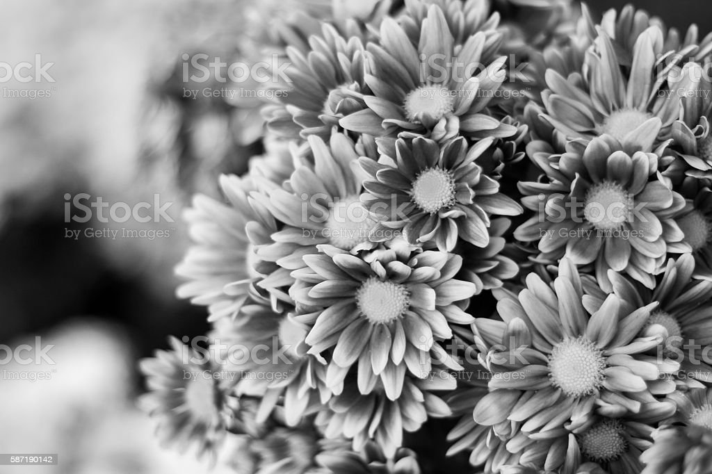 black and white flowers stock photo