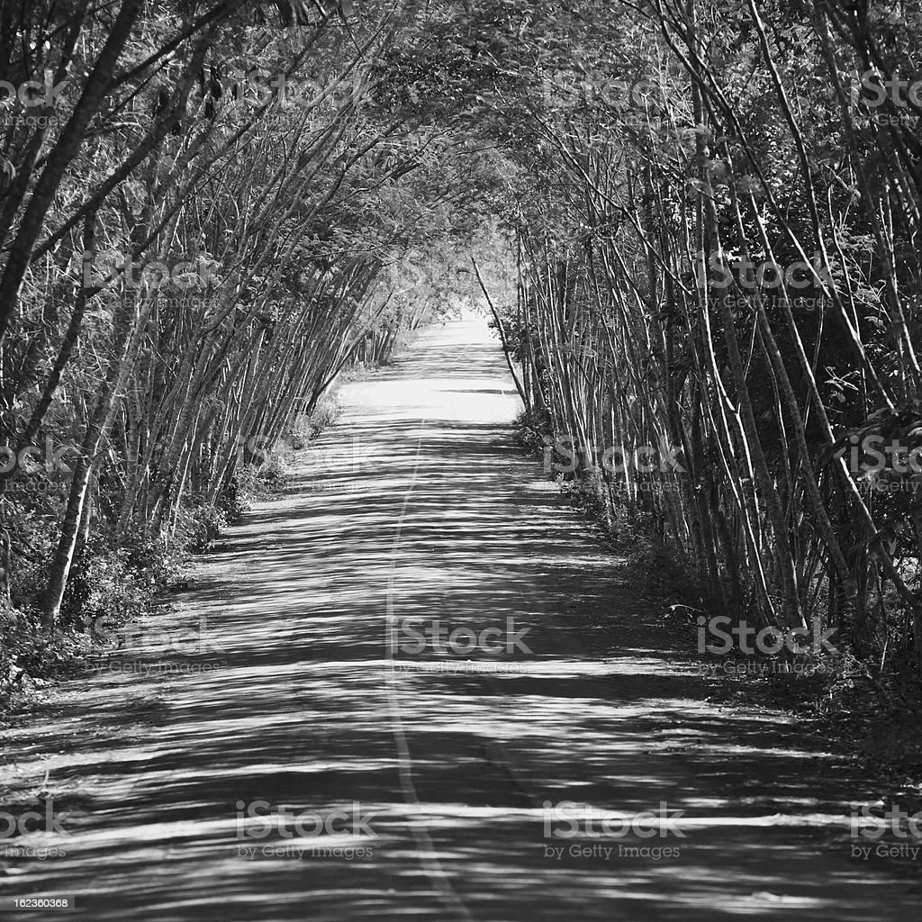 black and white forest royalty-free stock photo