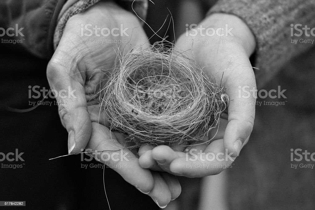 Black and white hands holding bird nest stock photo