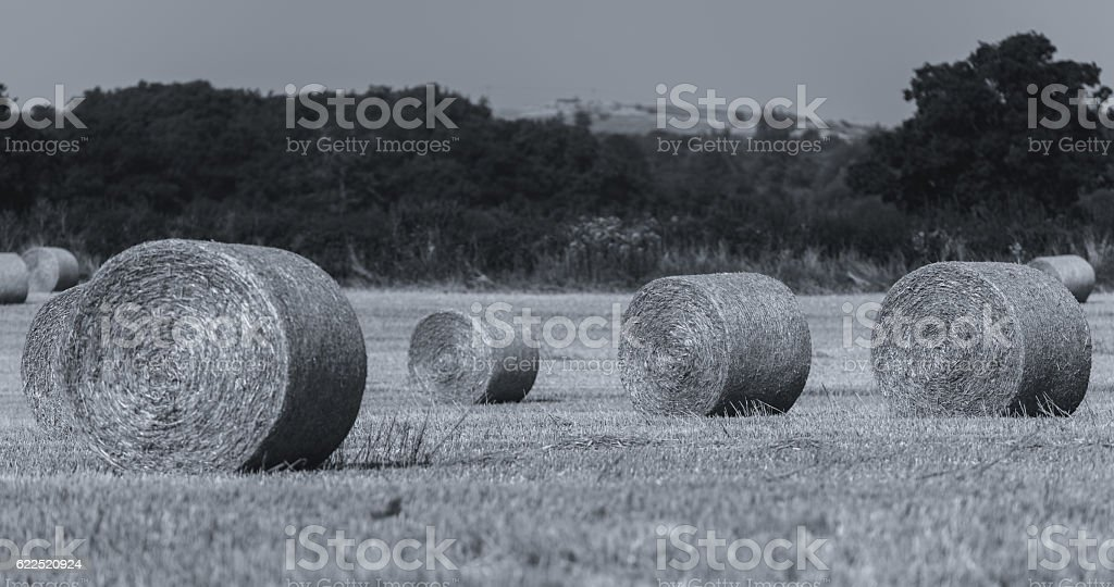 Black and White Hay Rolls in a Field stock photo