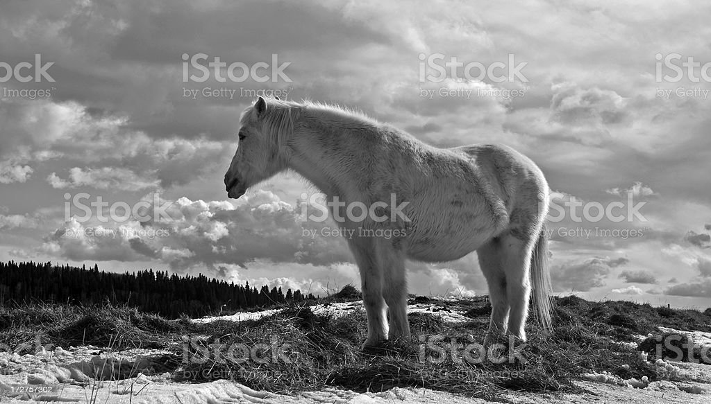 Black and White Horse royalty-free stock photo