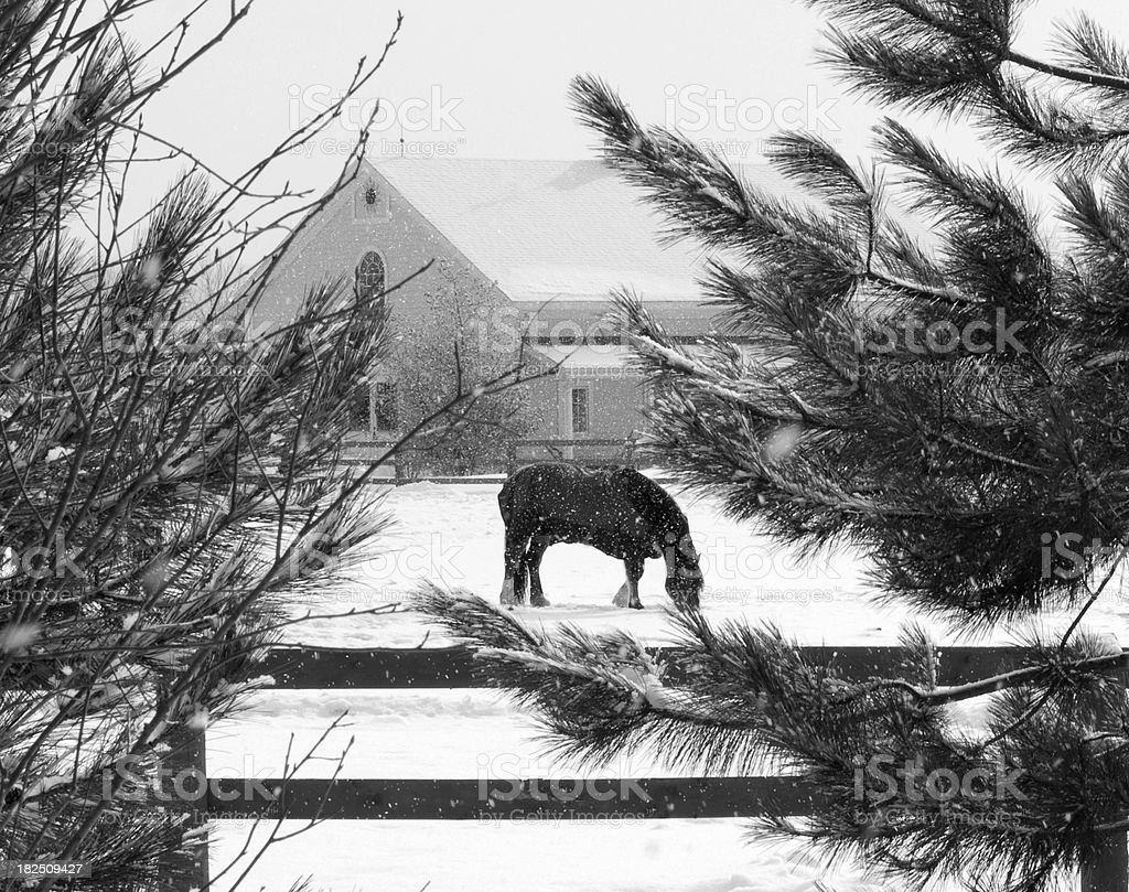 Black and white horse with barn in snow storm royalty-free stock photo