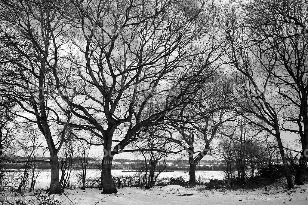 Black and white image of dormant trees in the snow royalty-free stock photo