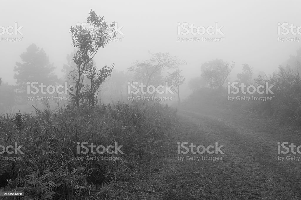 black and white image of tree trunks and foggy morning stock photo