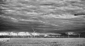 Black and White Infrared Manitoba Soybean Fields and Windmills