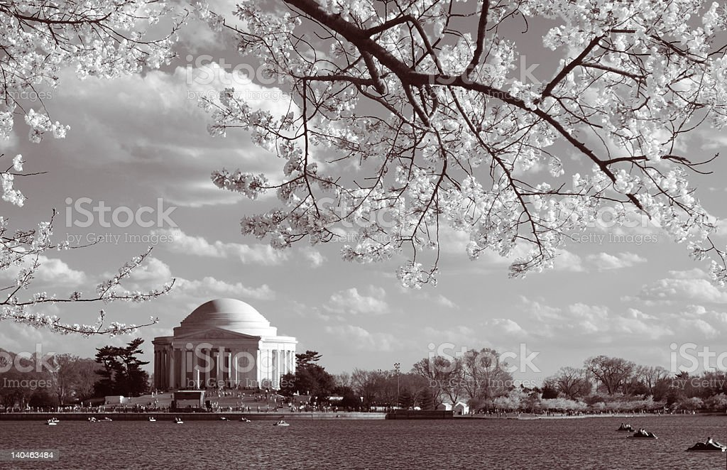 Black and White Jefferson Memorial Cherry Blossoms in Washington DC royalty-free stock photo