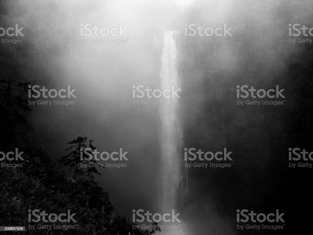 Black and White Landscape Akaka Falls, Big Island, Hawaii stock photo