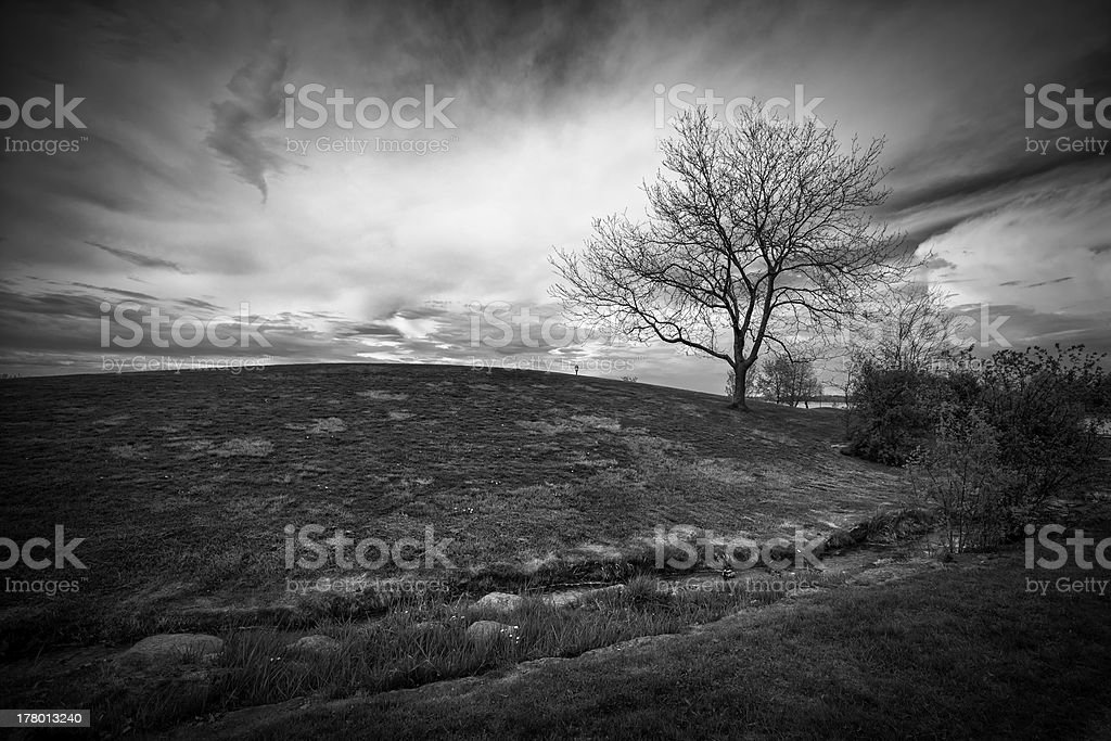 Black and White Landscape of Hill with Leafless Tree stock photo