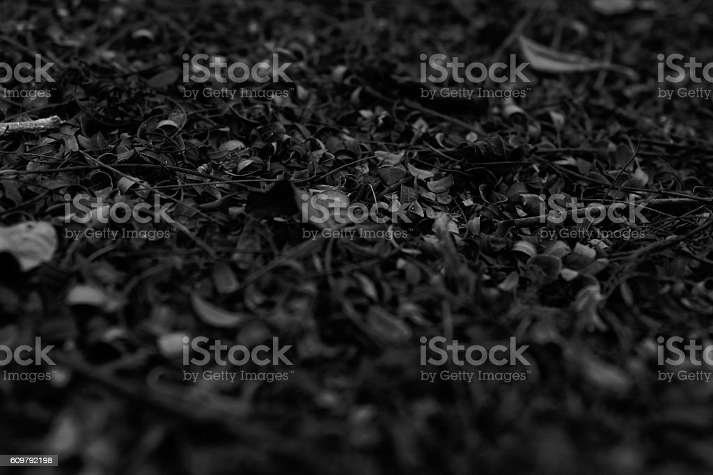 Black and White Leaves texture for background stock photo