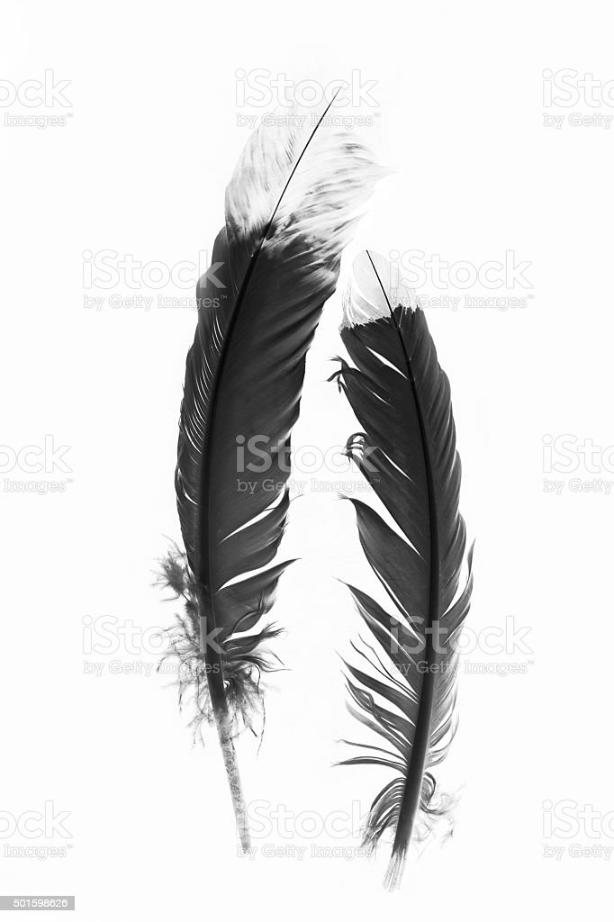 Black and White Native American Indian Feathers stock photo