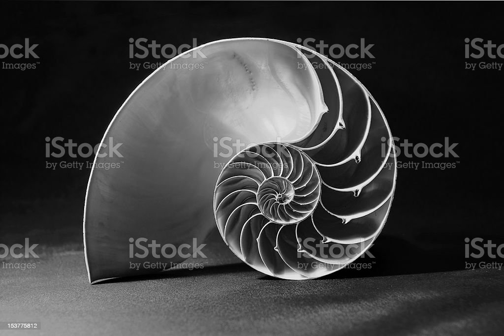 Black and white nautilus shell with geometric pattern stock photo