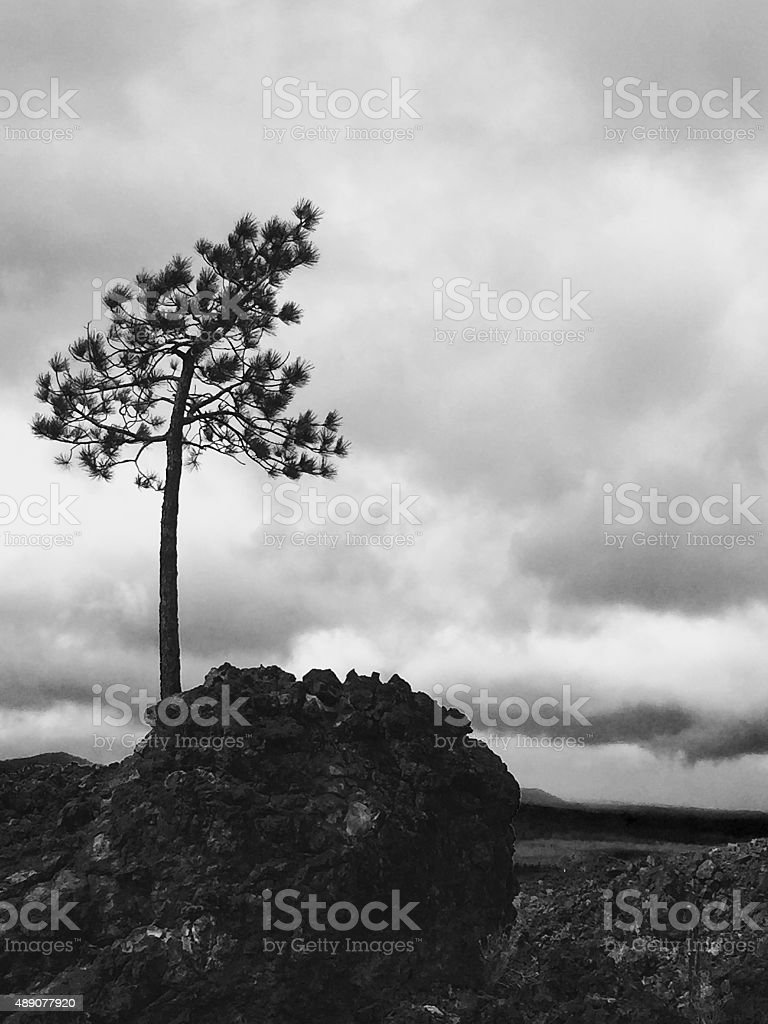 Black and white of a lone tree in Oregon park royalty-free stock photo