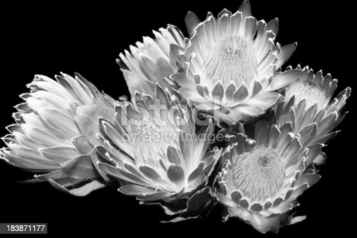 black and white of exotic flowers stock photo   istock, Beautiful flower