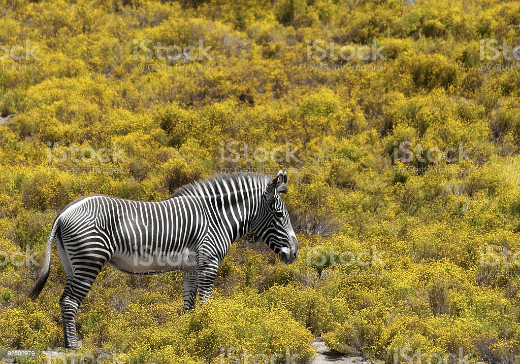 Black and white on yellow royalty-free stock photo