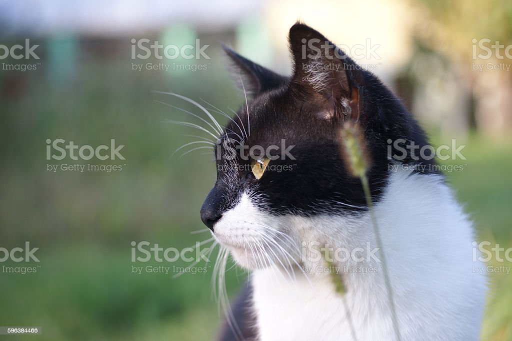 Black and white outdoor cat stock photo