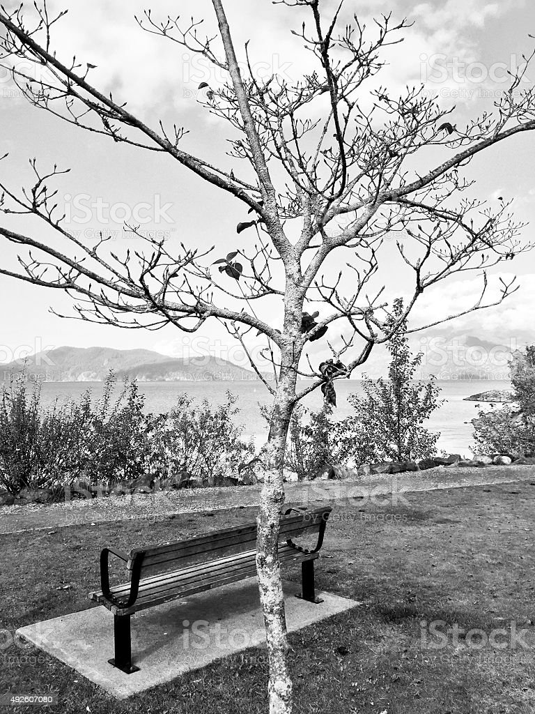 Black and white park bench, tree and lake royalty-free stock photo