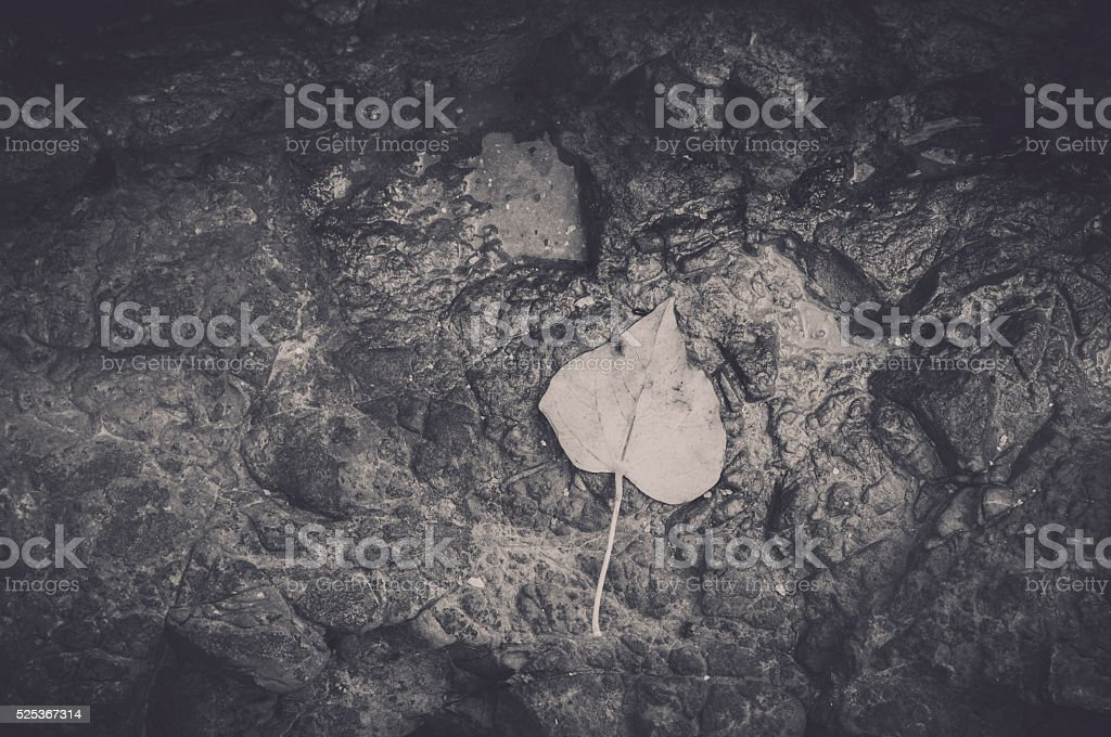 Black and white Pho leaf on ground. stock photo