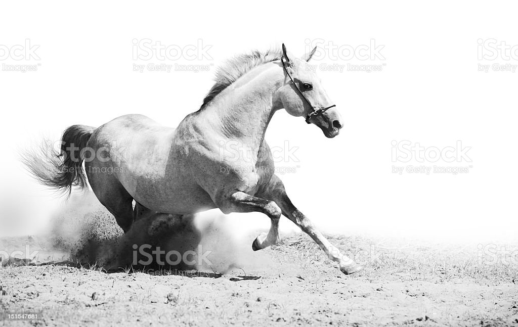Black and white photo of stallion in dust stock photo