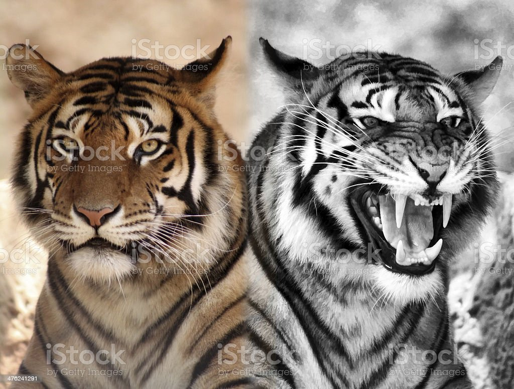 Black and White plus Color Expression Opposites royalty-free stock photo