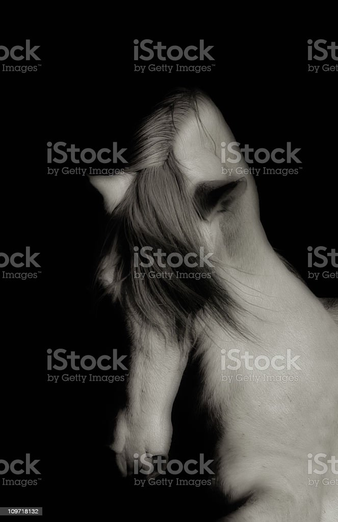 Black and White Portrait of Horse royalty-free stock photo