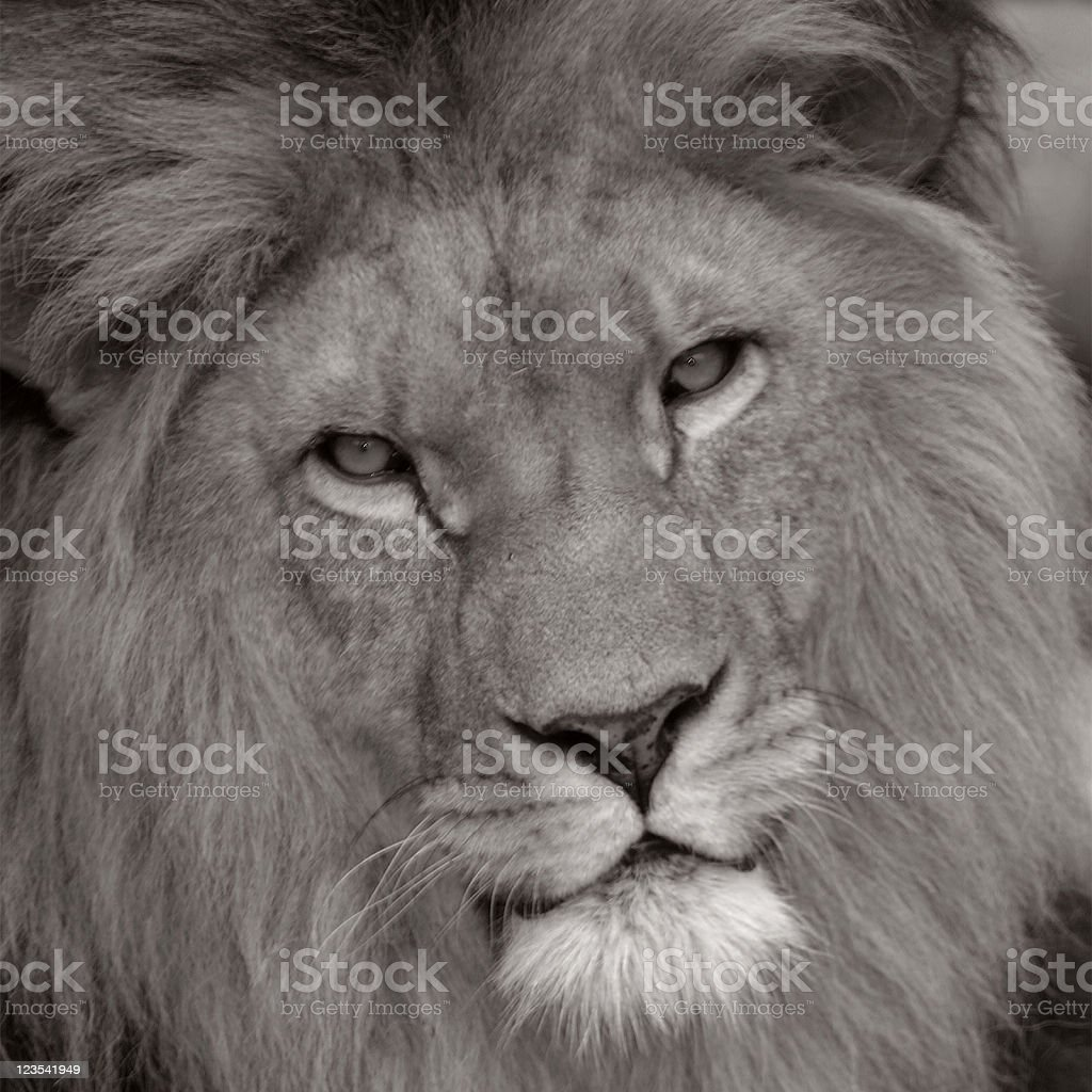 Black and white portret of the king royalty-free stock photo