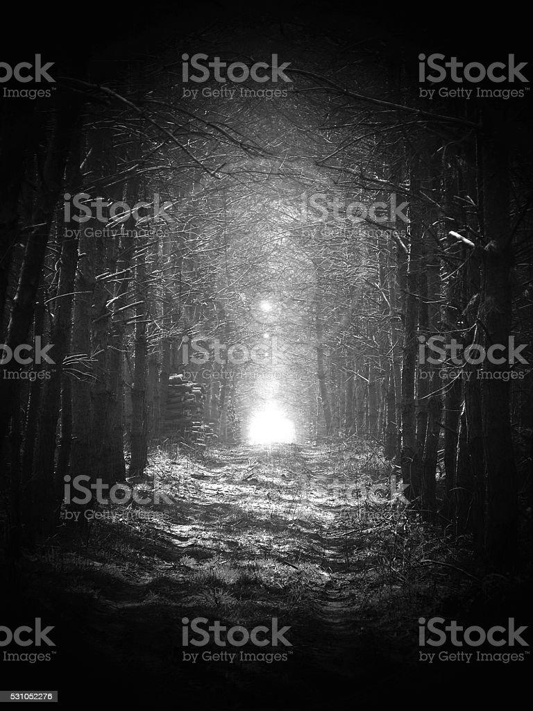 black and white, Road in magic dark forest, sun glare stock photo