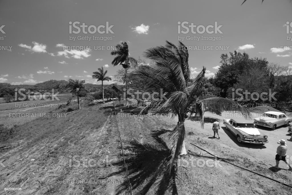 Black and white scene with palm trees and classic cars and pedestrians in Cuba stock photo