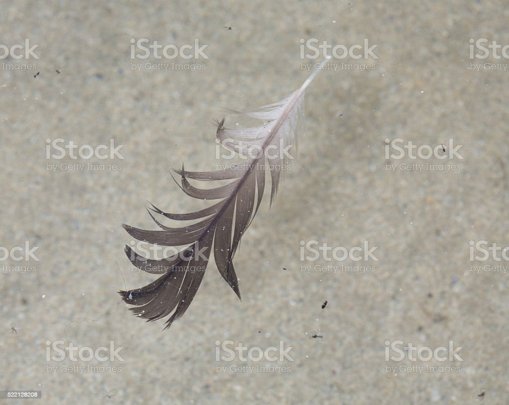 Black and white seagull feather floating in rockpool stock photo